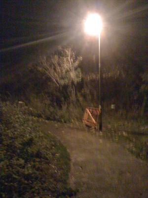 10-10-29 Illuminated nightwalk