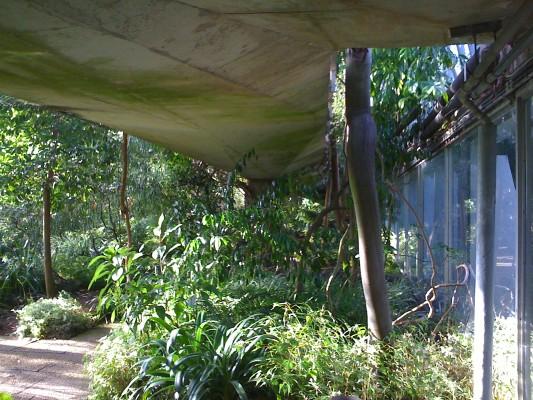 10-10-30 Modernistic jungle