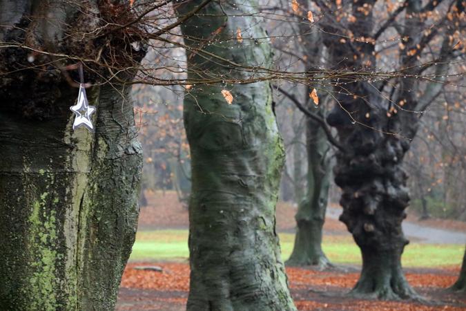 15.Dec: Kris Vanmerhaeghe, Brussels, Belgium -