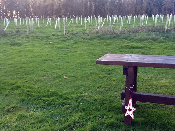 5.Dec: Yassein Mohamed, Backyard garden, Park Village, University of Sussex, Brighton, England -